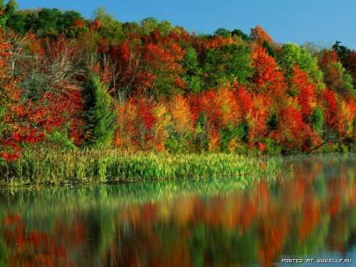 фото дороги и лес