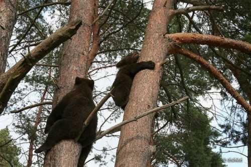 Милые и очаровательные гости из леса (16 фото)