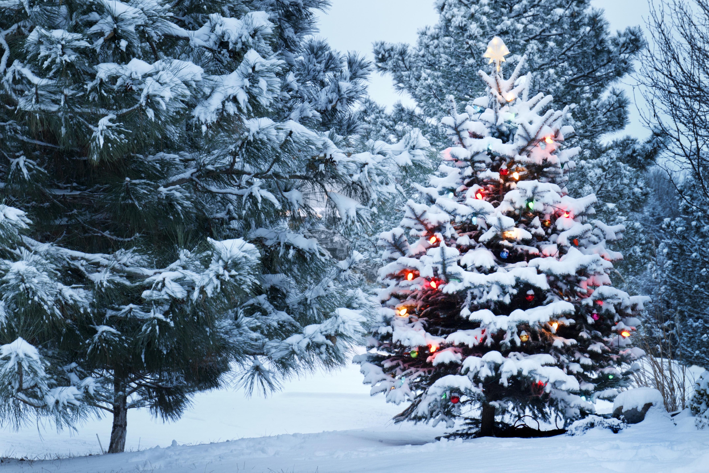 Картинки новогодние красивые (30 фото) - photo#6