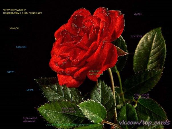 Цветы на калужской в обнинске