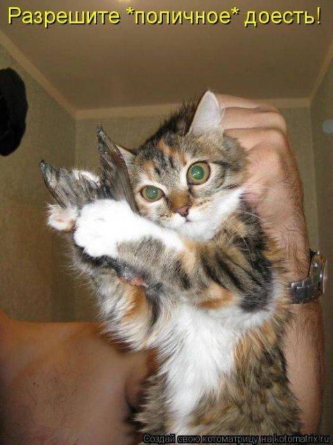 Прикольные котоматрицы свежак (42 фото)