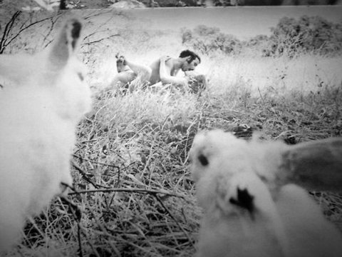 Смешные и самые прикольные животные (50 фото)