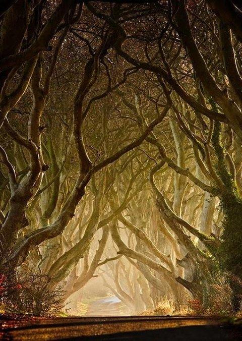 Удивительные деревья 24 фото