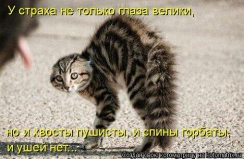 Лучшие котоматрицы этой недели 63 фото