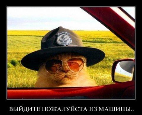 http://bygaga.com.ua/uploads/posts/thumbs/1341598408_demotivatori_pro_givotnih_725_99-26.jpg