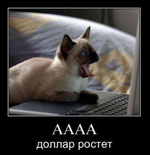 http://bygaga.com.ua/uploads/posts/thumbs/1341598439_demotivatori_pro_givotnih_725_99-27.jpg