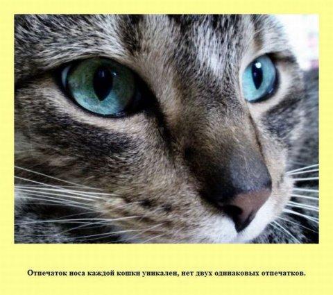 http://bygaga.com.ua/uploads/posts/thumbs/1343157487_samie_interesnie_fakti_v_kartinkah_obo_vsem-56.jpg