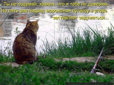 Утренние котоматрицы (51 фото)
