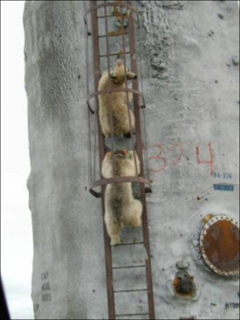 http://bygaga.com.ua/uploads/posts/thumbs/1343648104_zabavnie_i_prikolnie_medvedi_67_17-33.jpg