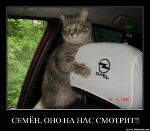 Сборник демотиваторов с котэ 42 фото