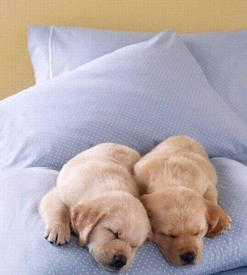 Очаровательные спящие животные (68 фото)
