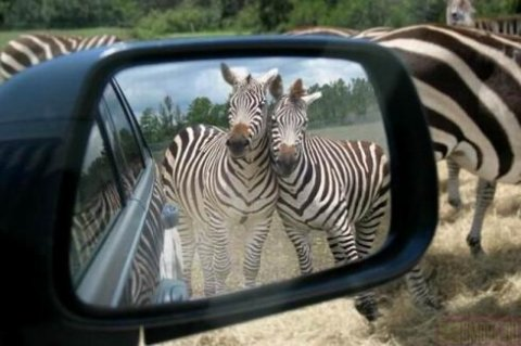 Забавные случаи и приколы с животными
