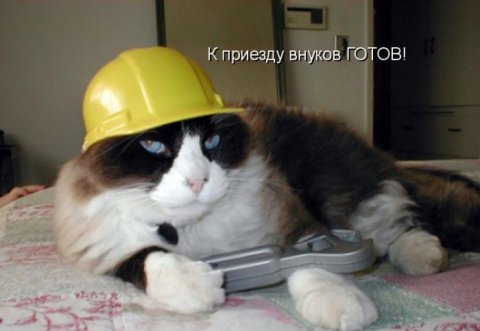 http://bygaga.com.ua/uploads/posts/thumbs/1350847339_kotomatrici_s_ulibkoy_5237-72.jpg