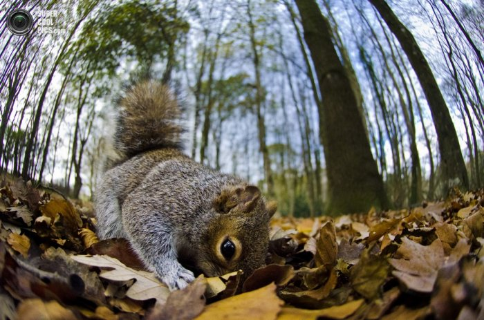 Mammal Photographer of the Year 2013 (15 ����)