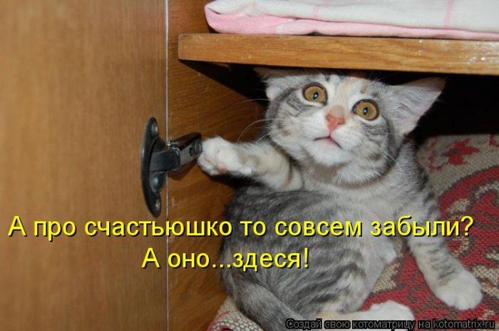 Весёлые котоматрицы четверга (35 фото)