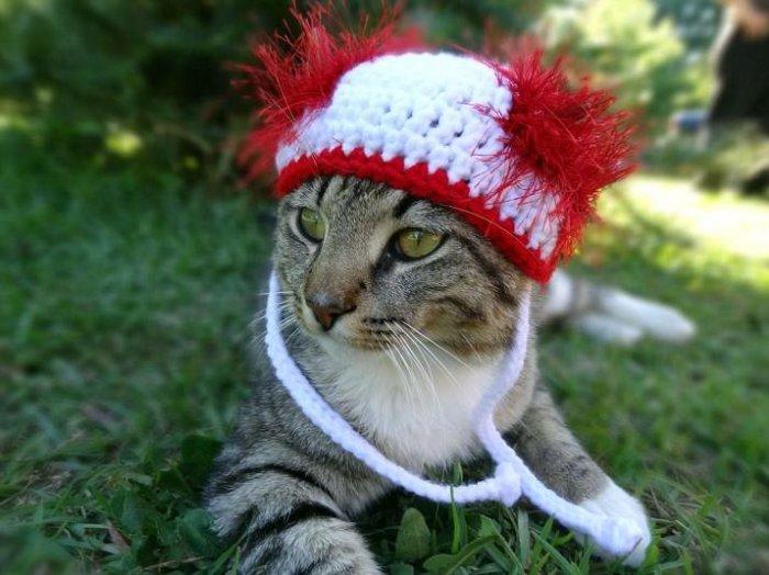 Коты красуются в шапках и шляпках (18 фото)